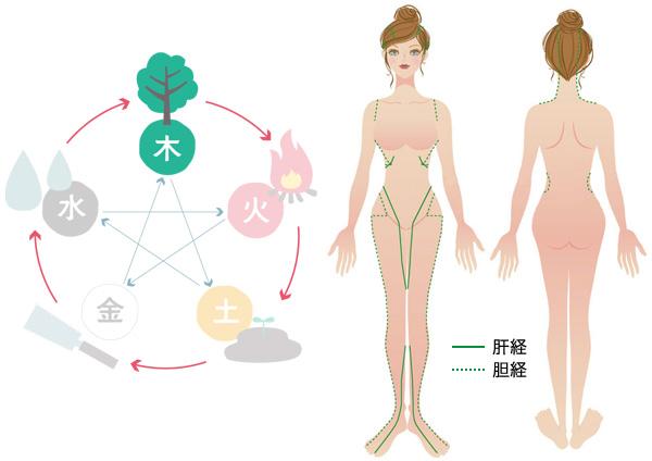 【木】肝経・胆経