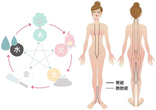 【水】腎経・膀胱経